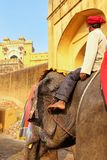 Mahout riding decorated elephant on the cobblestone path to Ambe. R Fort near Jaipur, Rajasthan, India. Elephant rides are popular tourist attraction in Amber Royalty Free Stock Photography