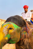 Mahout riding decorated elephant on the cobblestone path to Amber Fort near Jaipur, Rajasthan, India. Elephant rides are popular tourist attraction in Amber Stock Photo