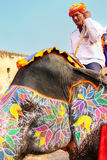 Mahout riding decorated elephant on the cobblestone path to Amber Fort near Jaipur, Rajasthan, India. Elephant rides are popular tourist attraction in Amber stock photography
