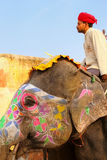 Mahout riding decorated elephant on the cobblestone path to Amber Fort near Jaipur, Rajasthan, India. Elephant rides are popular tourist attraction in Amber stock image