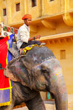 Mahout riding decorated elephant inside Jaleb Chowk main courty. Ard of Amber Fort, Rajasthan, India. Elephant rides are popular tourist attraction in Amber Fort Royalty Free Stock Photography