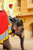 Mahout riding decorated elephant inside Jaleb Chowk main courty. Ard of Amber Fort, Rajasthan, India. Elephant rides are popular tourist attraction in Amber Fort royalty free stock images
