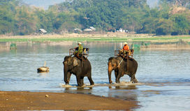 Mahout riding elephant Royalty Free Stock Image