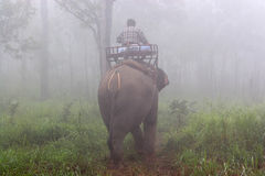Mahout riding elephant in the wild on the morning. Thailand. Stock Photography