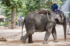 Mahout show how to train elephant in forestry industry. Lam Pang, Thailand Royalty Free Stock Photography