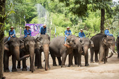 Mahout show how to train elephant in forestry industry. stock images