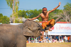 Mahout Sitting Elephant Trunk Surin Stock Image