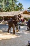 Mahout som klättrar på elefanten för showen för turister på det Maesa elefantlägret, Chiang Mai, Thailand royaltyfri bild