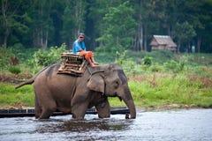 Mahout som rider en elefant i den grunda floden Royaltyfria Bilder