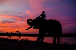Mahout som rider en elefant på solnedgången med den vibrerande himlen royaltyfri bild