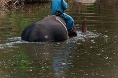 Mahout som sitter på baksidan av en elefant som gör duschelefanten arkivbilder