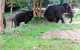 Mahout som sitter på baksidan av en elefant som gör duschelefanten arkivfoton