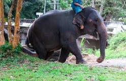 Mahout som sitter på baksidan av en elefant som gör duschelefanten royaltyfria bilder