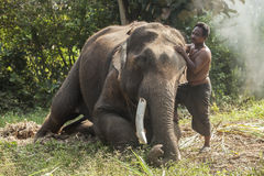 Mahout at Surin Province, Thailand Stock Image
