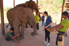 Mahout trainer with his elephant Stock Photo