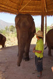 Mahout trainer with his elephant Royalty Free Stock Photography