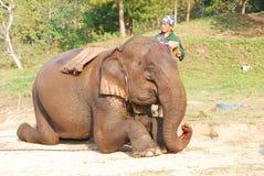 Mahout und Elefant lizenzfreie stockbilder