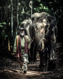 A mahout walking with his elephant to go back home after bathing Stock Image
