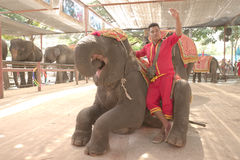 Mahout wave his hand while lean on his elephant Stock Image