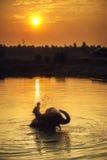 Mahout y elefante Fotos de archivo libres de regalías