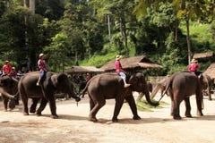 Mahouten rider hans elefant i nordligt av Thailand Arkivbilder