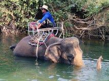 Mahouten sitter på baksidan av en elefant royaltyfri fotografi
