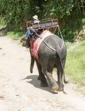 Mahouten tar elefanterna till skogen efter tjänste- Thailand Arkivfoton