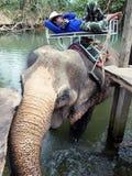 Mahouten vilar på en elefant royaltyfri bild