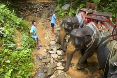 Mahouts在泰国,亚洲 图库摄影