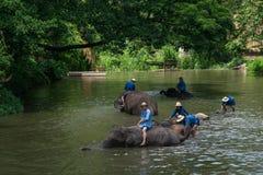 Mahouts badar och gör ren elefanterna i floden Royaltyfria Foton