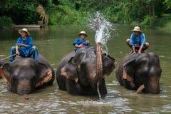 Mahouts badar och gör ren elefanterna i floden Arkivfoto