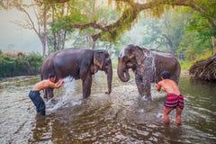 Mahouts baden und säubern die Elefanten im Fluss Lizenzfreie Stockfotos