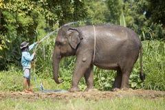 Mahouts bathing the elephants. Stock Photography