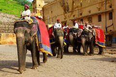 Mahouts and elephants by the Amber Fort in Amer, India