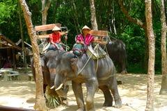 Mahouts responsable de los elefantes que esperan a pasajeros en Siam Safari Elephant Camp en Phuket, Tailandia Fotografía de archivo libre de regalías