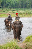 Mahouts riding elephants crossing the river Royalty Free Stock Photography