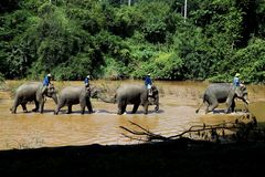 Mahouts und seine Elefanten lizenzfreie stockfotografie