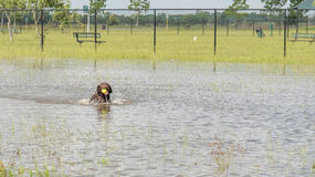 30 mai 2015 - Beverly Kaufman Dog Park, Katy, TX : jouer de chiens Photographie stock