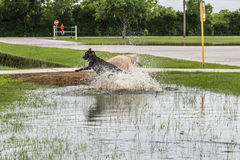30 mai 2015 - Beverly Kaufman Dog Park, Katy, TX : jouer de chiens Photos libres de droits