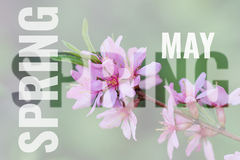 Mai-Postkarte mit Frühlingshintergrund Lizenzfreie Stockbilder