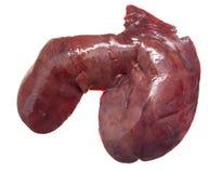 Maiale del fegato fotografia stock