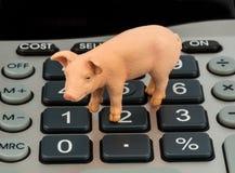 Maiale e calcolatori Fotografia Stock Libera da Diritti