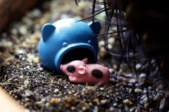 Maiale miniatura sveglio sul letto della natura fotografia stock