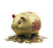 Maiale - Piggy Fotografia Stock Libera da Diritti