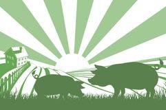 Maiali della siluetta sull'azienda agricola Immagine Stock Libera da Diritti