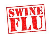 maiali di preventivo di manutenzione di influenza di malattia di concetto Immagine Stock