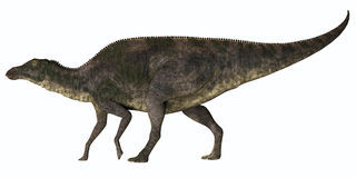 Maiasaura Dinosaur Profile. Maiasaura was a duck-billed herbivorous dinosaur that lived in Montana, USA in the Cretaceous Era Stock Photos