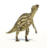 Maiasaura dinosaur, young child, photorealistic representation. Royalty Free Stock Photos