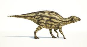 Maiasaura dinosaur, young child, photorealistic representation. Royalty Free Stock Image