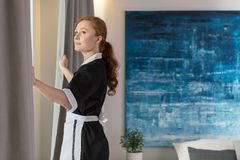 Maid unveiling curtains. In a hotel room with blue painting on the wall stock image